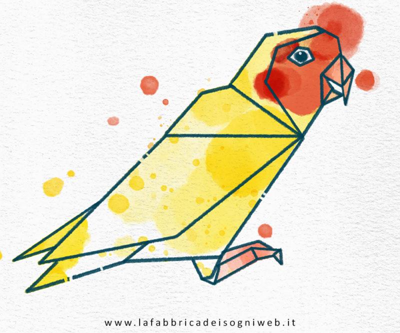 pappagallo colore